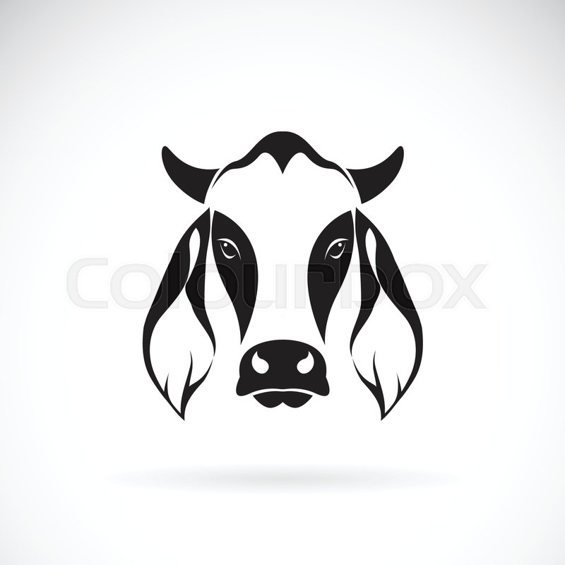 vector of cow head design on white background cow logo