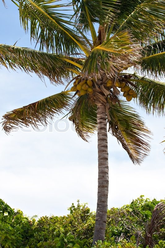 Tropical Island Shop