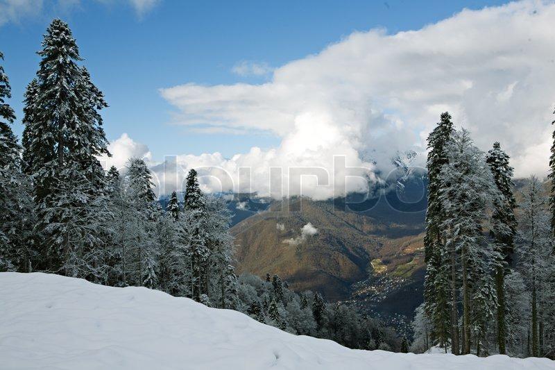 Stock foto af 'frosne træer i vinteren skoven'