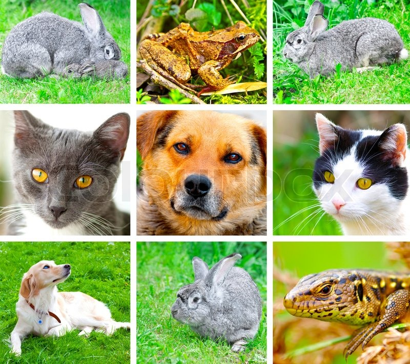 Stock image of 'Collage of animals images'