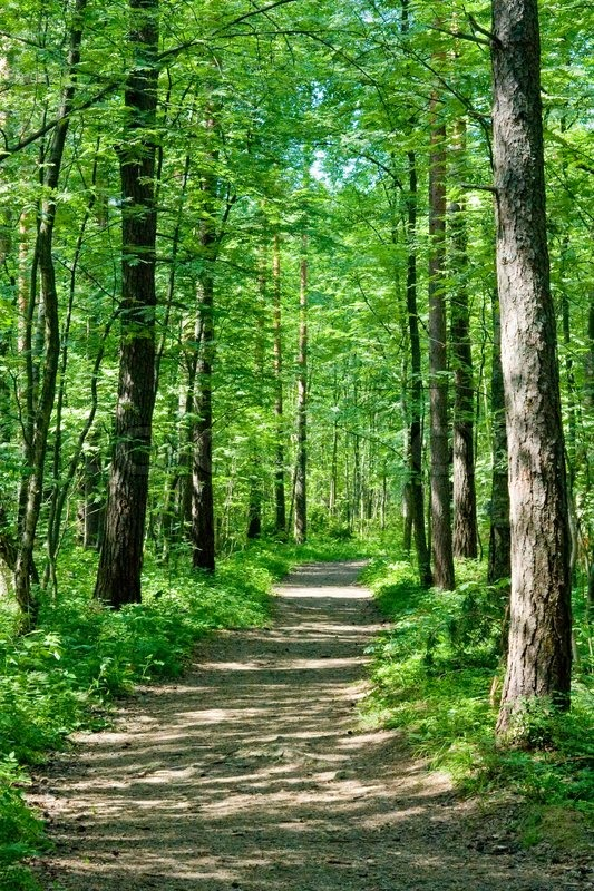 Paintings of Forest Paths Path Through Summer Forest in
