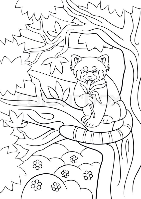 coloring pages little cute red panda sits on the tree branch and