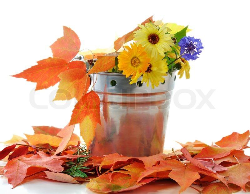 herbstblumen und bunten bl tter in einer dekorativen eimer stockfoto colourbox. Black Bedroom Furniture Sets. Home Design Ideas