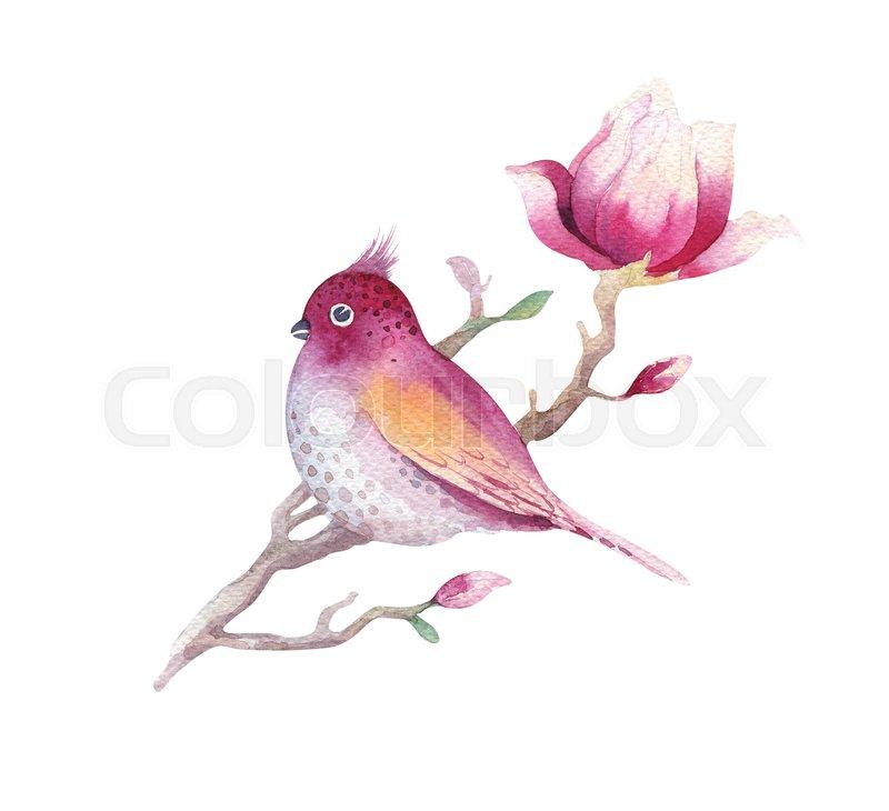Watercolor Painting Magnolia Blossom Stock Photo Colourbox