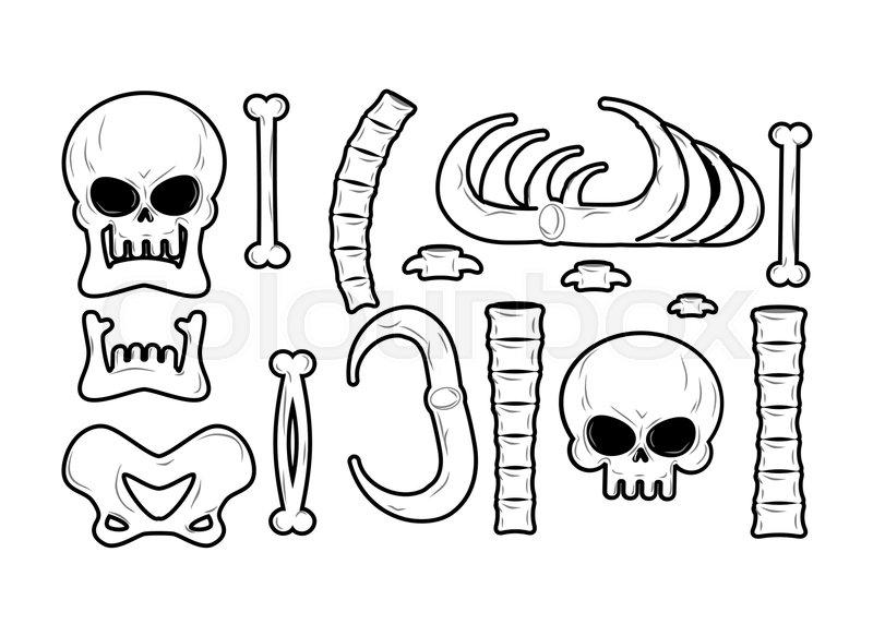 Bones Set Anatomy Icons Skull And