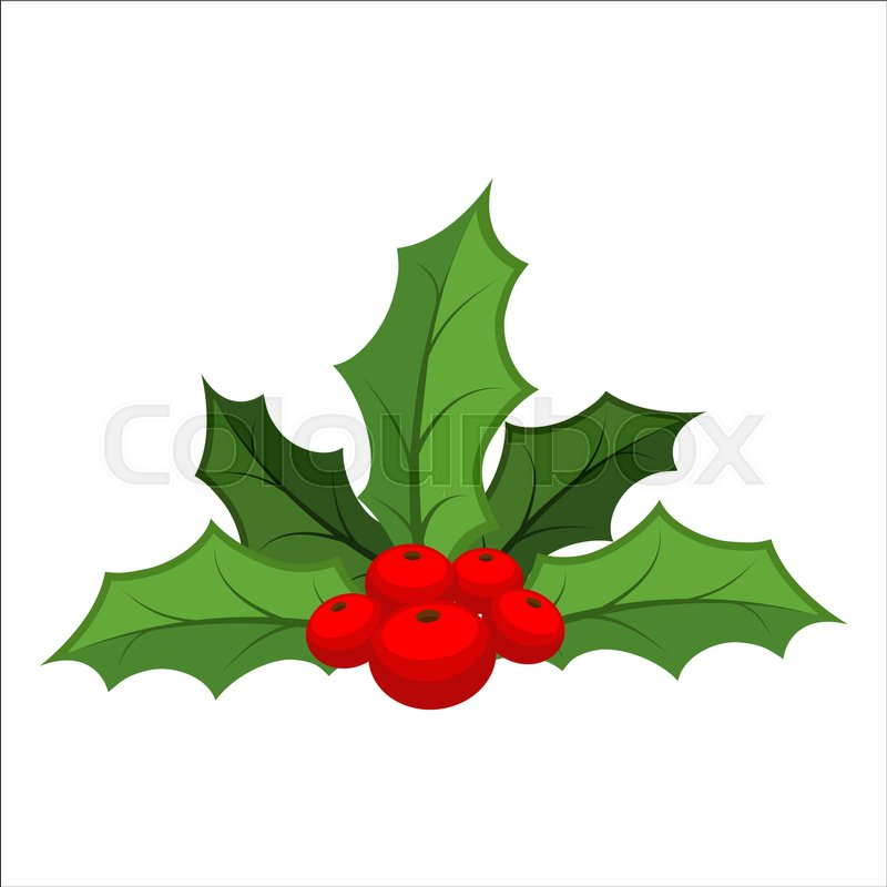 mistletoe isolated traditional christmas plant holiday red berry