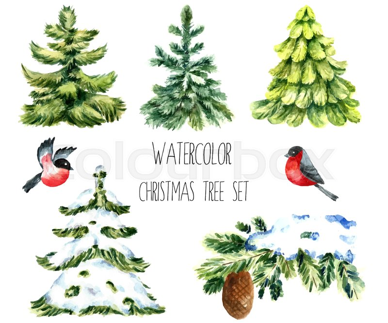 Watercolor Christmas Trees. Isolated Pine Tree, Winter