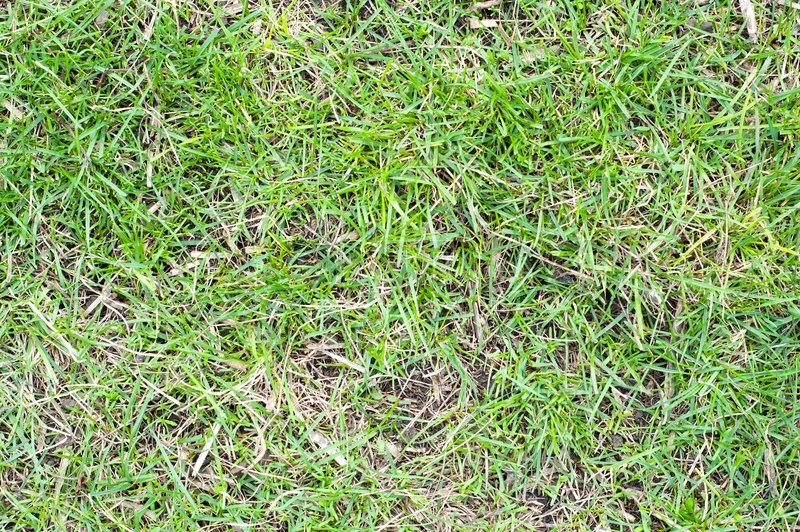 Green grass with earth as texture, stock photo