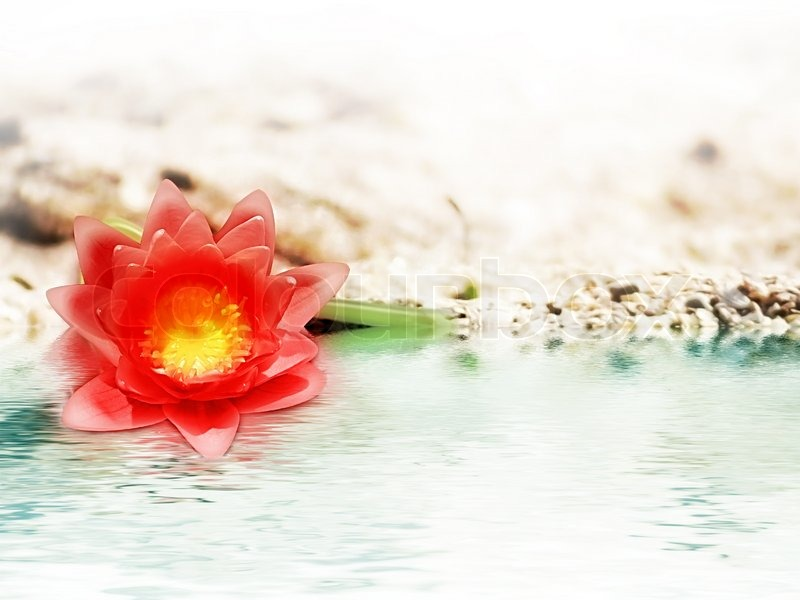 Red Flower In The Sand Near Water