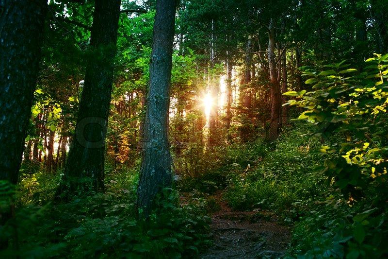 Stock foto af skov med en sol lys