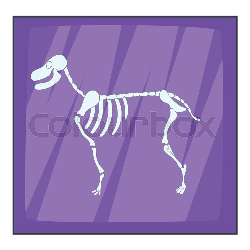 Dog Skeletal Structure - Amazing Deluxe Project On H3.danieledance.com