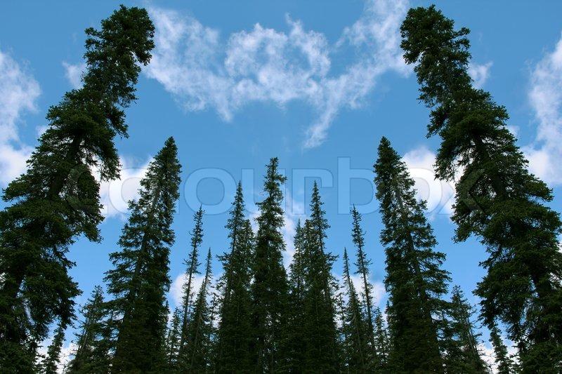 immergr ne b ume und blauer himmel von oben perspektive. Black Bedroom Furniture Sets. Home Design Ideas