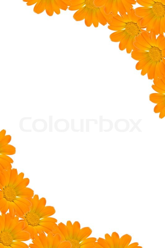 Floral background frame from orange flowers and white copyspace ...