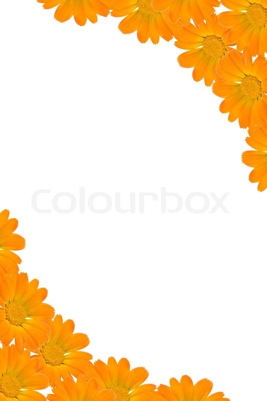 Orange Flower Background Wallpaper WallDevil