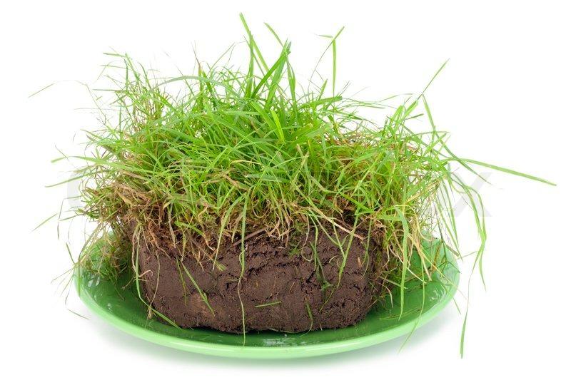 st ck von einem kuchen aus torf kompost liegt mit einem. Black Bedroom Furniture Sets. Home Design Ideas