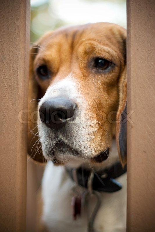 Dog Breed Info Separation Anxiety