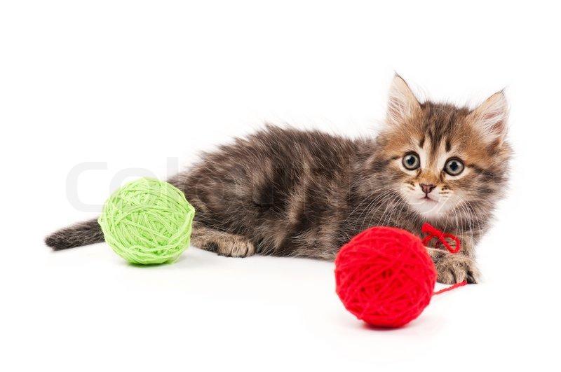 Stock Bild von 'Nette kleine sibirische Kätzchen mit clews isoliert auf weißem Hintergrund'