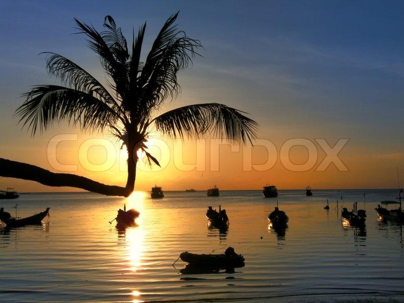 sonnenuntergang mit palmen und longtail boote am tropischen strand ko tao insel thailand. Black Bedroom Furniture Sets. Home Design Ideas