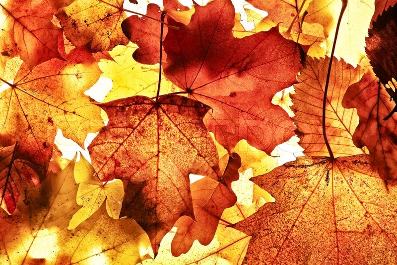 Autumn Background From The Fallen Down Leaves