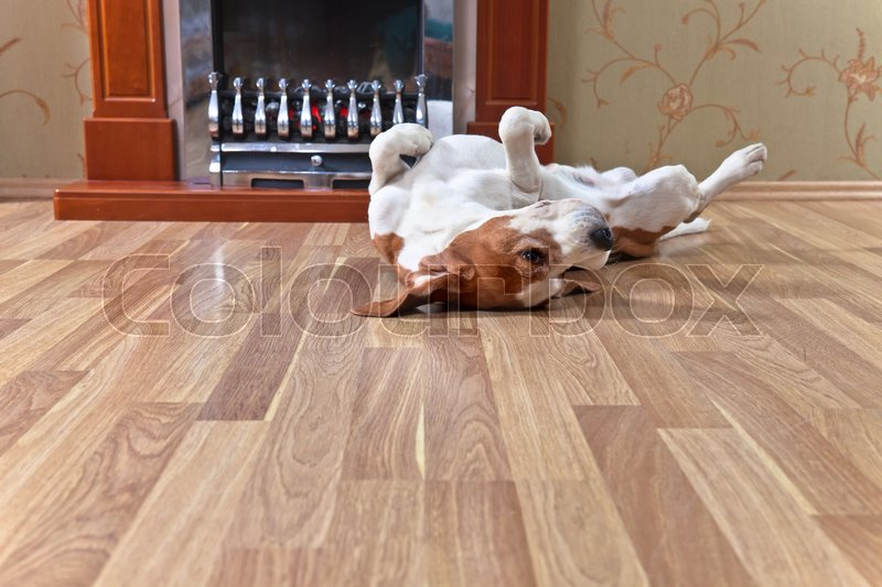Resting dog on wooden floor near to a fireplace, stock photo