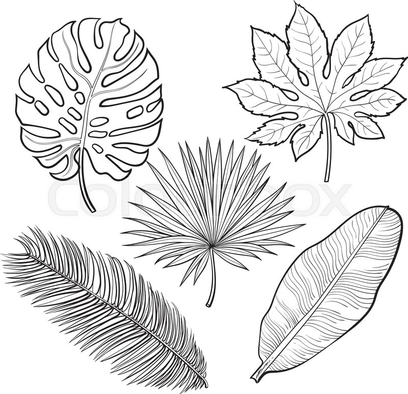Tropical Forest Coloring Pages
