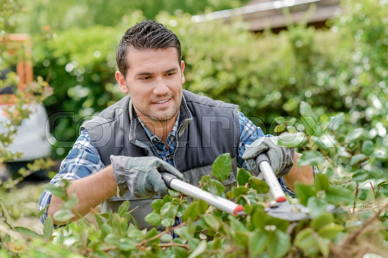 Man trimming bushes, stock photo