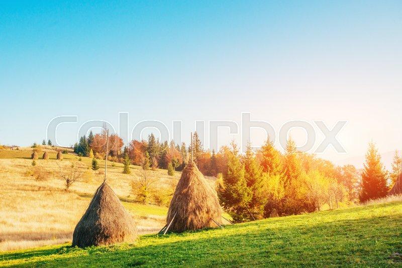 Traditional hay stacks, typical rural scene. Carpathian. Ukraine, Europe, stock photo