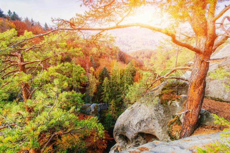 Forest in sunny afternoon while season. Autumn Landscape. Ukraine. Europe, stock photo