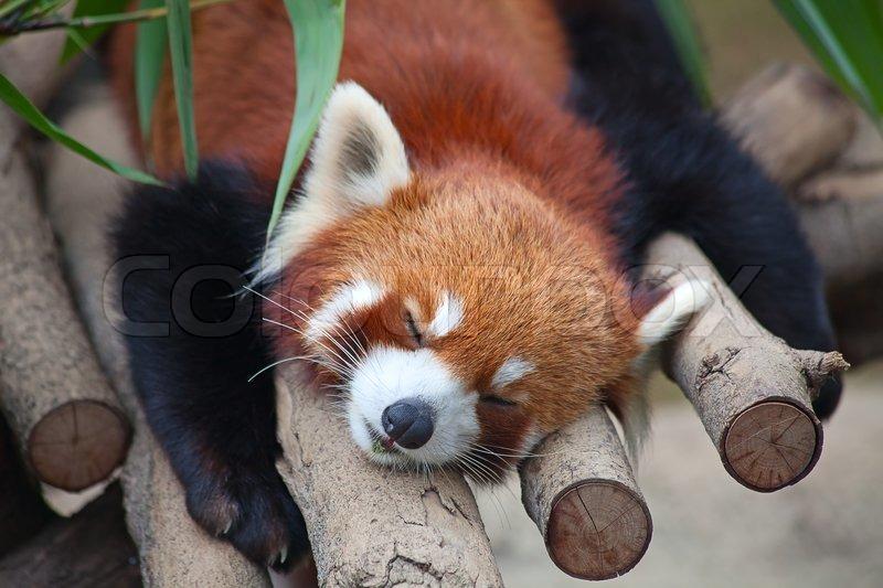 Firefox Property Management