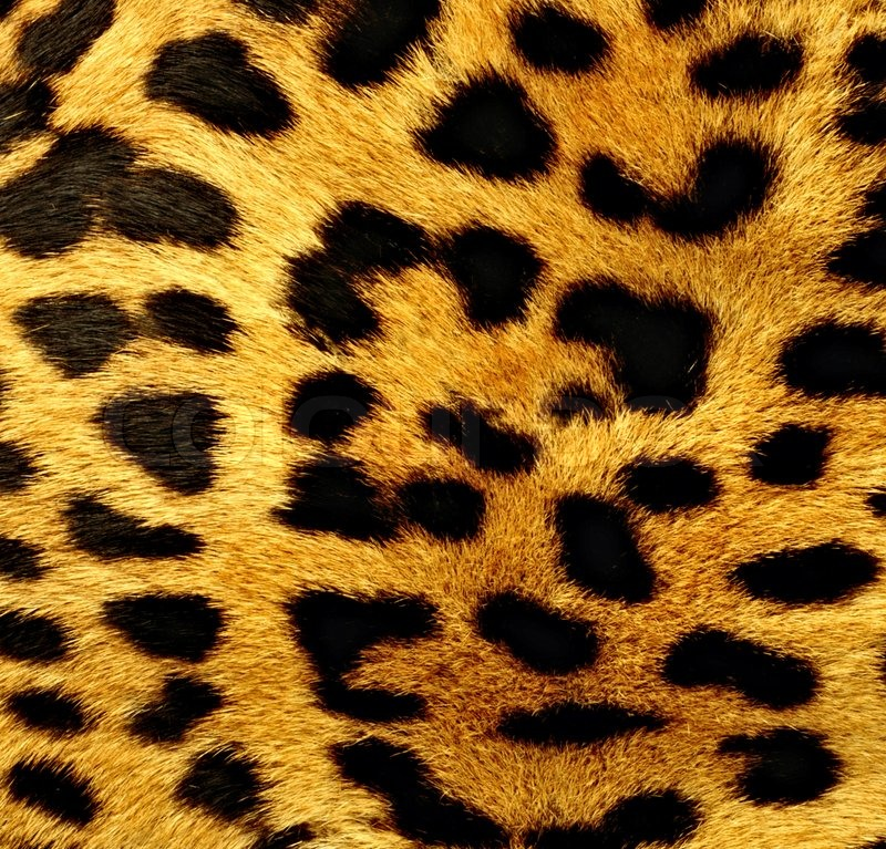 animal patterns in nature - photo #22