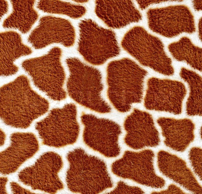 Natural Pattern Of Giraffe Fur In Detail Stock Photo Colourbox Unique Giraffe Pattern