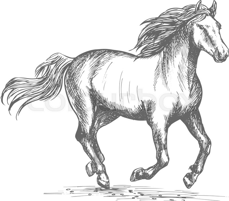Horse Racing Sport Sign White Mustang Stallion In Fast Gallop Run