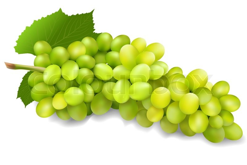Illustration of bunch of green grapes on isolated ...