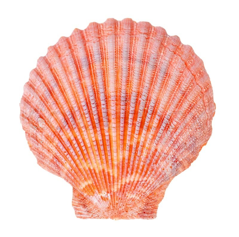 meet shell singles Definition of single shell in the definitionsnet dictionary meaning of single shell information and translations of single shell in the most comprehensive dictionary definitions resource on the web.
