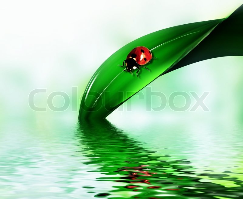 Ladybug on a leaf of grass above the water stock photo colourbox - Ladybug watering can ...