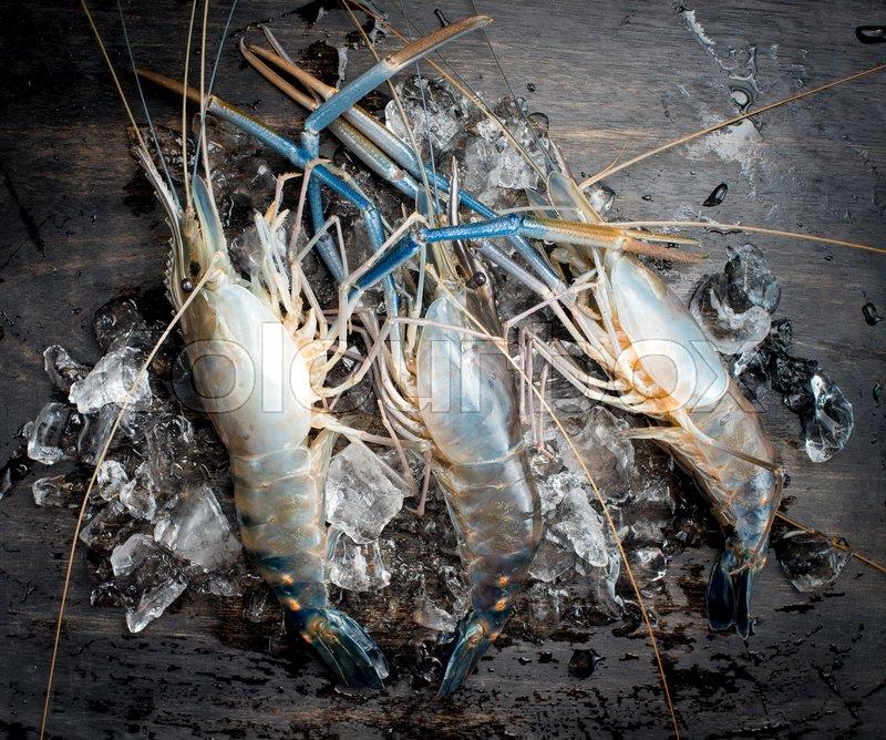Giant river prawn on ice | Stock image | Colourbox