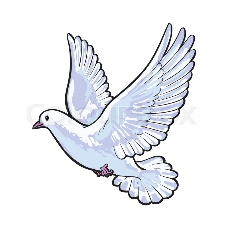Free Flying White Dove Sketch Style Vector Illustration Isolated On