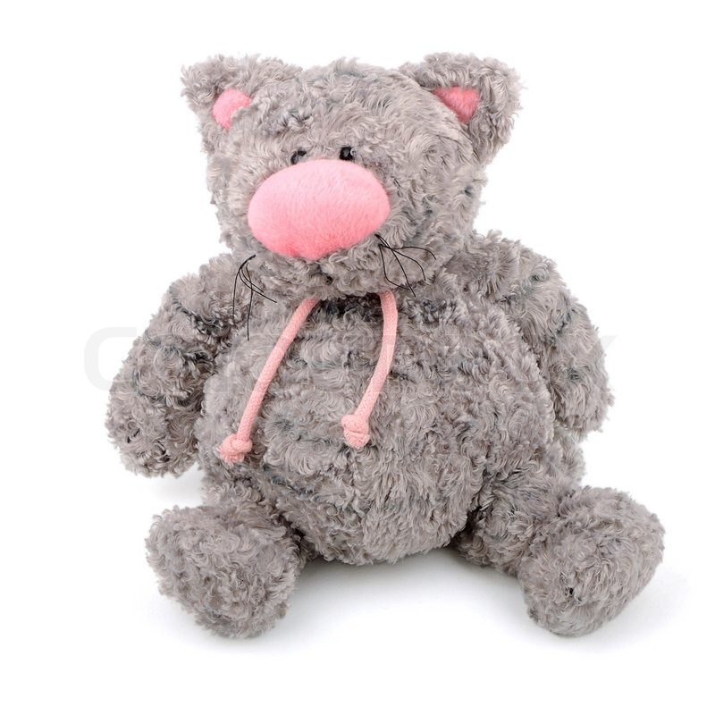 Graue Teddy Katze mit rosa Nase isoliert | Stockfoto | Colourbox