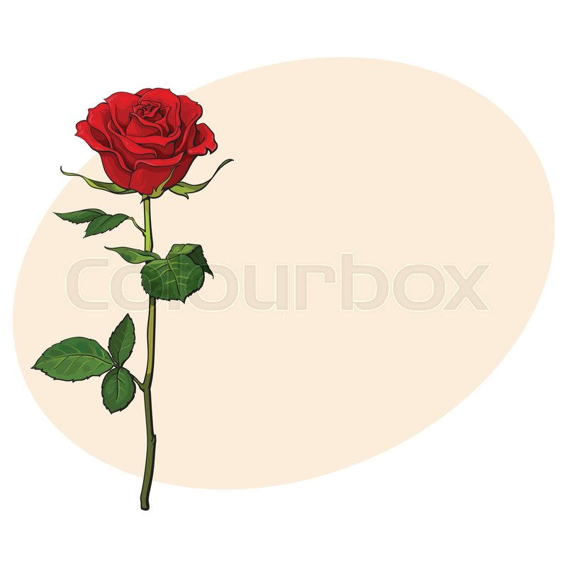 Deep Red Ruby Rose Flower With Green Leaves Sketch Style Vector