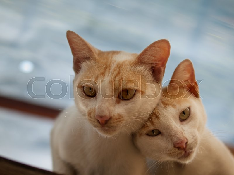 COLOR PHOTO OF COUPLE CATS, stock photo