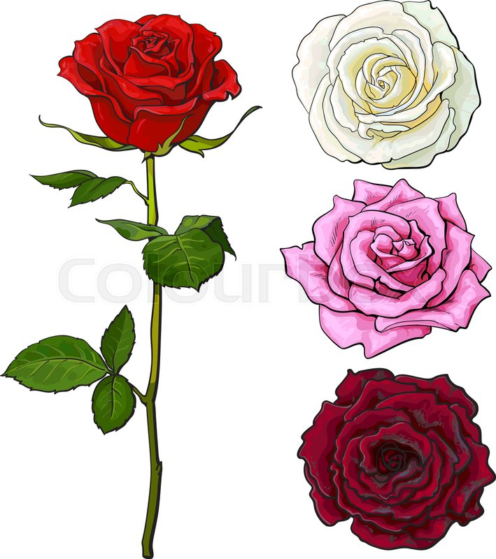 Pink White Deep Red Open Rose Bud And Flower With Green Leaves