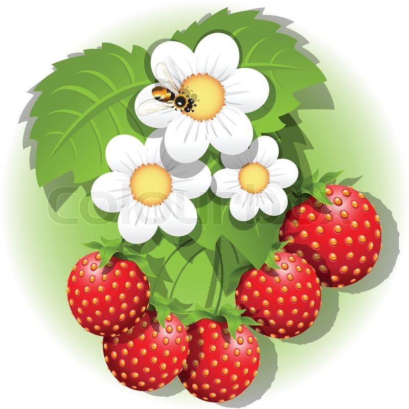 есть, картинка ягодка для сада глазурью, основным