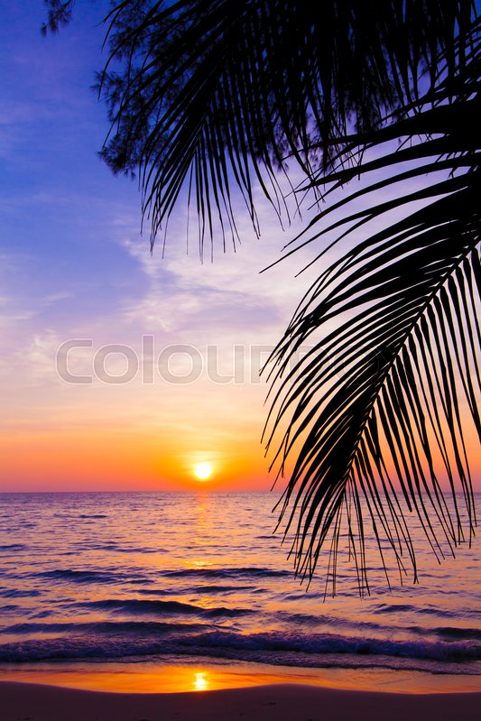Stock Image Of Sunset Landscape Beach Palm Trees Silhouette On Tropical