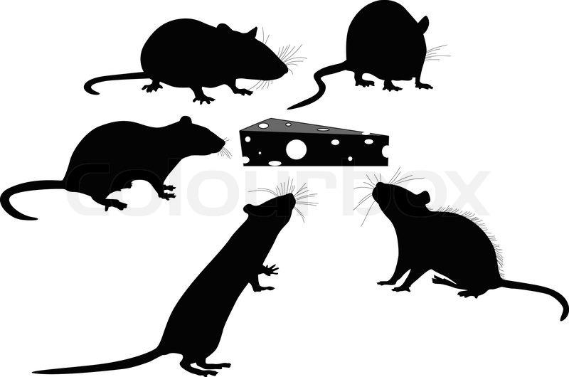 Ratten | Vektorgrafik | Colourbox