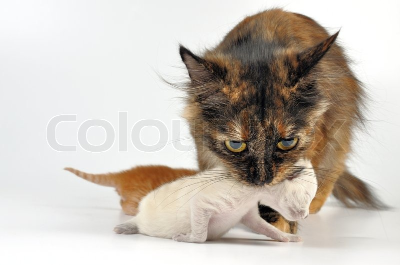 how to get my animal to stop biting her fur