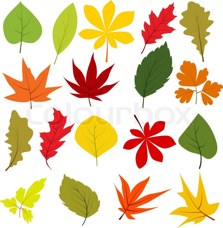 Collection Of Different Autumn Leaves Stock Vector Colourbox