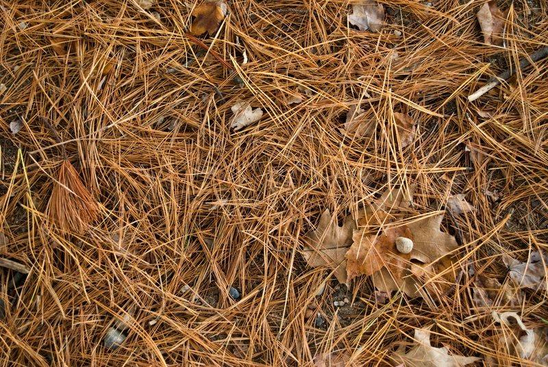 Ein Detail Schuss Des Auf Dem Waldboden Im Herbst