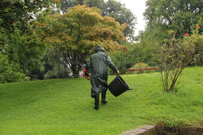 The gardener in green raincoat is walking with a loppers and a black bucket in his hand over the lawn in the park in the city in the wet and rainy summer, stock photo