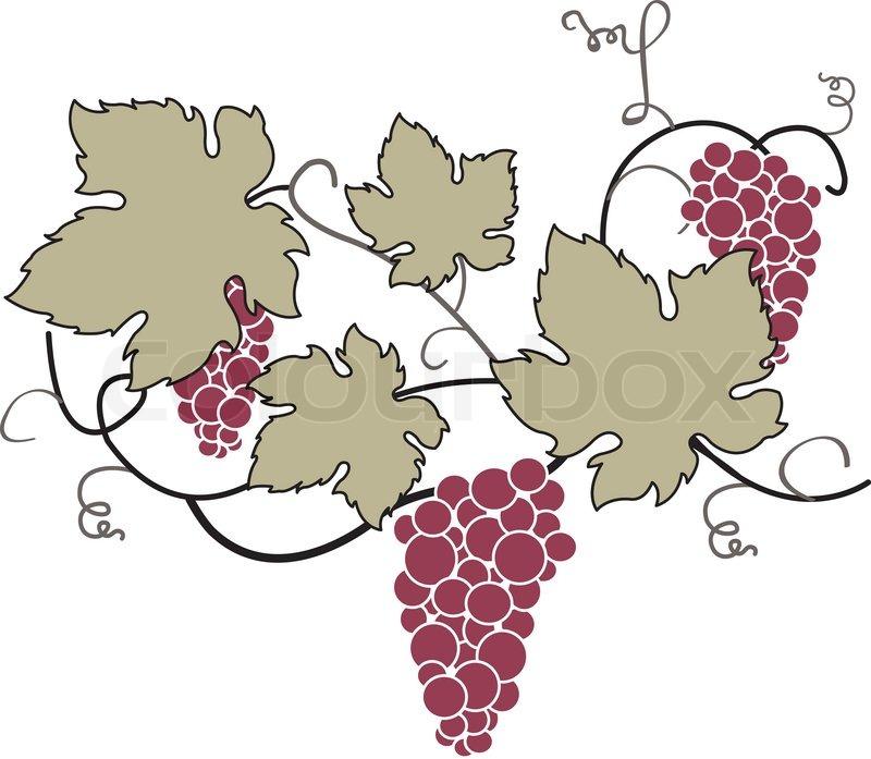 Decorative Grape Vine | Stock Vector | Colourbox