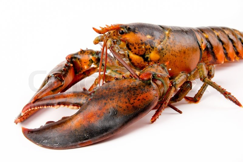 Close Lobsters - What Is There To Smile About ?